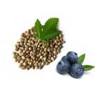 Knusperspaß bio fruchtig